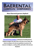 Baerental German Shepherd Breeders Maine