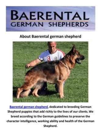 Baerental German Shepherd Breeders Maine