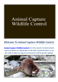 Animal Capture Wildlife Control : Raccoon Removal Service in Los Angeles