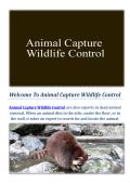 Animal Capture Wildlife Control : Raccoon Removal Service in Los Angeles
