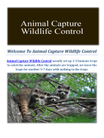 Animal Capture Wildlife Control : Raccoon Removal in Los Angeles, CA