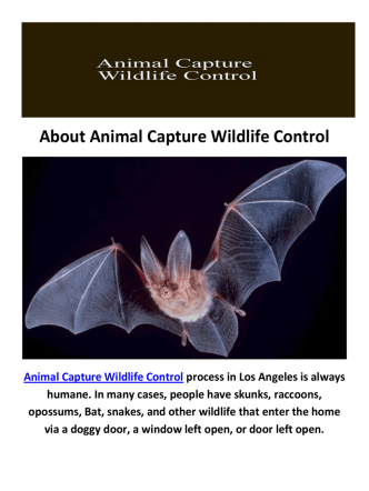 Animal Capture Wildlife Control | Bat Removal Los Angeles