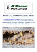 O'Connor Pest & Termite Control Company in Ventura, CA