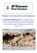 O'Connor Pest & Termite Control Service in Hayward