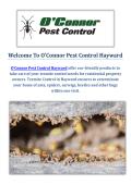 O'Connor Pest & Termite Control Service in Hayward