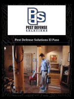Pest Defense Solutions El Paso : Pest Control in El Paso, TX