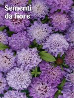 Sementi da fiore - 6.2 Mb