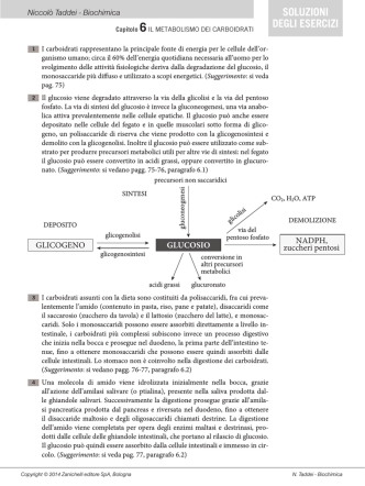 Capitolo 6 – Il metabolismo dei carboidrati