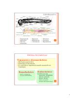 05_Anatomia_2014-2015 [modalità compatibilità]