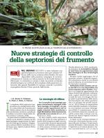 Nuove strategie di controllo della septoriosi del frumento