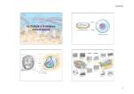La Cellula e il sistema membranoso