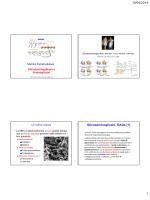 Diapostive sui glicosaminoglicani e proteoglicani della matrice.