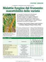 Malattie fungine del frumento: suscettibilità delle varietà