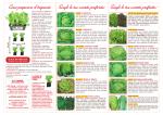 Come preparare il trapianto Scegli le tue varietà preferite: Scegli le