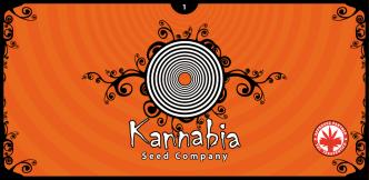 6 - Kannabia Seed Company