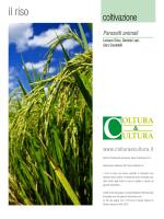 il riso - ResearchGate