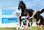 fisioterapia e riabilitazione per piccoli e grandi animali