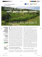 Vigneto sostenibile/1 - Agricoltura e pesca - Regione Emilia