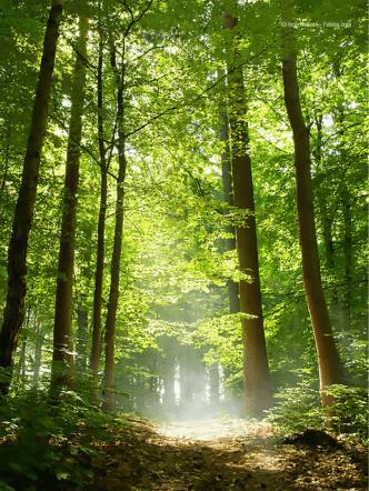 Attrezzi forestali
