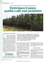 Fertirrigare il pesco: qualità e alte rese produttive