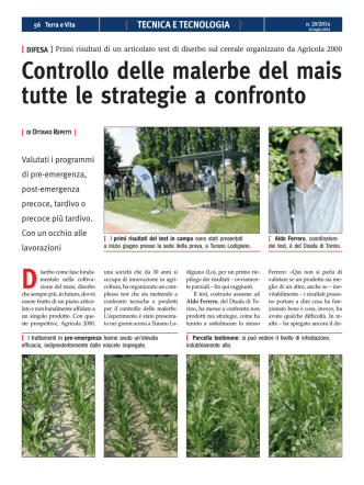Controllo delle malerbe del mais tutte le strategie a