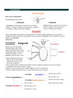 Astigmati Acarina Entomologia