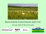 Buone pratiche di pascolamento degli ovini