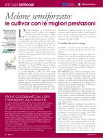 Melone semiforzato: - Agricoltura e pesca - Regione Emilia