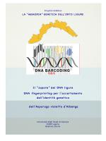 DNA fingerprinting asparago violetto - CusTAG