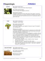 Fitopatologia FOGGIA - Servizio Agrometeorologico Regione Puglia