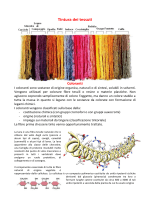 """schede tinture2014 - Dipartimento di Chimica """"G. Ciamician"""""""