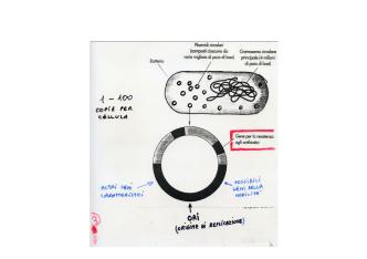 10. Proteine ricombinanti
