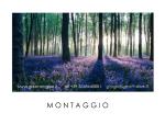 MONTAGGIO
