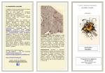 scuola primaria pag. 2.PDF - Istituto Comprensivo Corradini