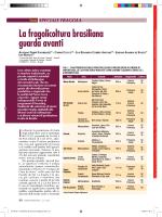 La fragolicoltura brasiliana guarda avanti - Ainfo