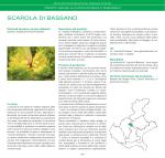 SCAROLA DI BASSANO - Veneto Agricoltura