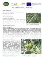 Bollettino olivo del 10-07