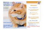 """""""Patologie Urinarie nel Gatto: il punto di vista del clinico e"""