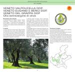 Atlante DOP-IGP.indb - Veneto Agricoltura