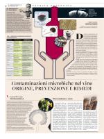 Contaminazioni microbiche nel vino Origine
