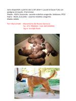 Sono disponibili a partire dal 12.07.2014 7 cuccioli di
