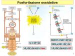 Ciprofloxacin Hcl Safe (Ciprofloxacin) Ciprofloxacin Fluoxetine