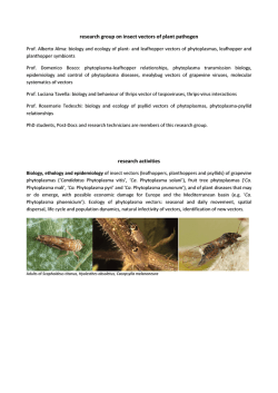 research group on insect vectors of plant pathogen