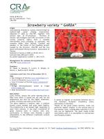 """Strawberry variety """" GARDA"""""""