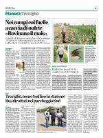 Nei campi col fucile a caccia di nutrie «Rovinano il mais»