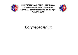 07.corynebacterium - Università degli Studi di Perugia