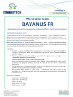 World Wide Yeasts BAYANUS FR