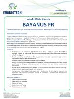 World Wide Yeasts BAYANUS FR