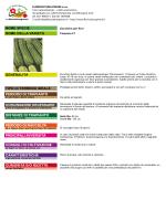 Zucchino per fiori Flaminio F1