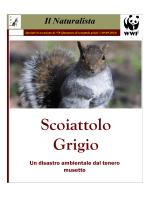 Mille sfumature di scoiattolo grigio